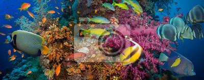 Plakát Coral a ryby
