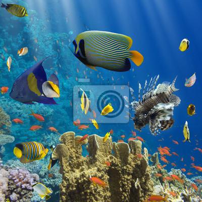 Plakát Coral a ryby v Rudém Sea.Egypt