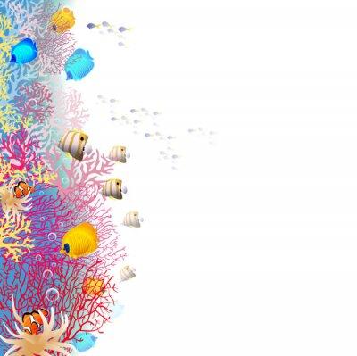 Plakát coralreef
