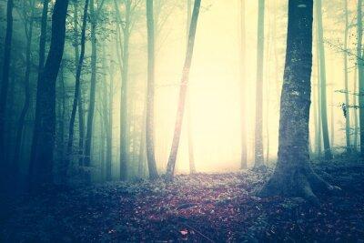 Plakát Creepy žlutozelená nasycených vinobraní mlhavo lesních dřevin krajiny. Barevný filtr a vintage filtr efekt použit.