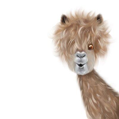 Plakát Cute lama portrait hand painting illustration