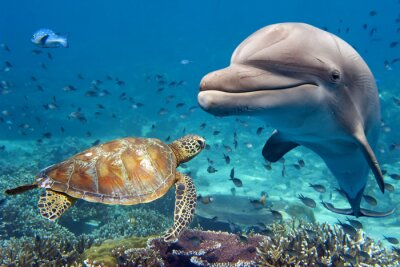 Plakát delfín a želva pod vodou na útesu