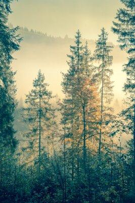 Plakát Divoký les v podzimní sezóně čase, vintage styl tónovaný