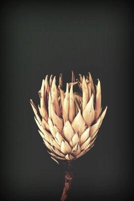 Plakát dried exotic flowers Protea on black background closeup vintage toned. poster