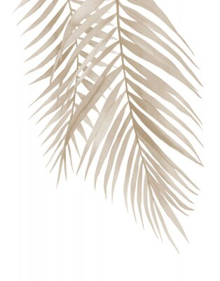 Plakát Dried palm branches. Pastel beige leaves. .Watercolour illustration isolated on white background.