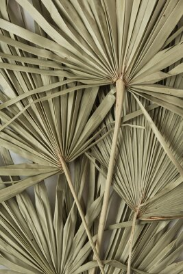 Plakát Dry tropical exotic palm leaves on white background. Flat lay, top view minimalist floral pattern aesthetic composition.