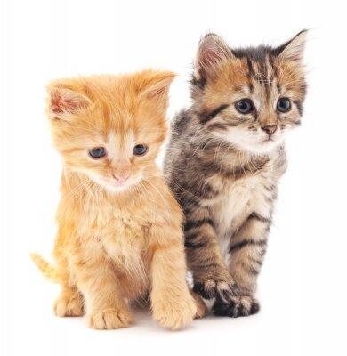 Plakát Dvě koťata.
