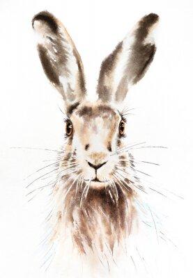 Plakát Easter bunnies watercolor illustration, rabbit portrait isolated