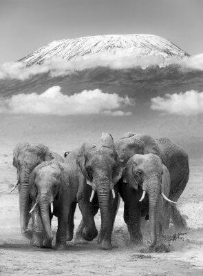 Plakát Elephant