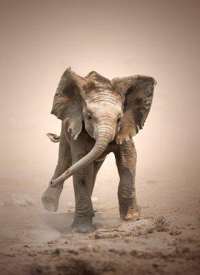 Plakát Elephant Calf mock nabíjení