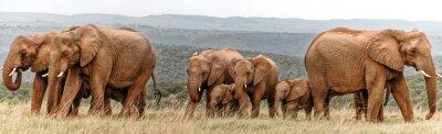 Plakát Elephant Herd