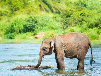 Plakát Elephatnt
