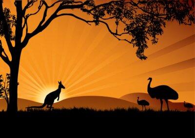 Plakát emu klokan západu slunce