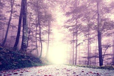 Plakát Fantasy fialová barva mlhavo lesní cesta. Snový pohádkový barva prales terén.