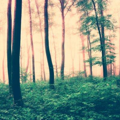 Plakát Fantasy lesní světlo scéna