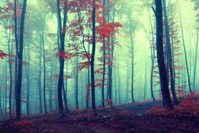 Plakát Fantasy ročník podzimní les