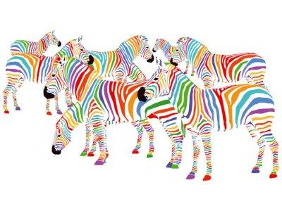 Plakát Farbenfrohe Zebry