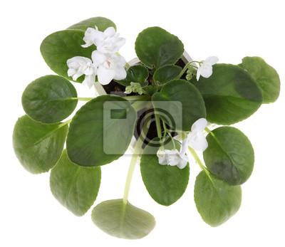 Plakát Fialová rostlina s bílými květy