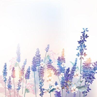 Plakát Floral vector spring illustration with field flowers lavender, morning light