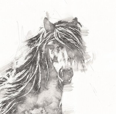 Plakát freehand horse head pencil drawing