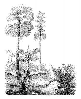 Plakát Gebang and Nipa Palm Trees vintage illustration.