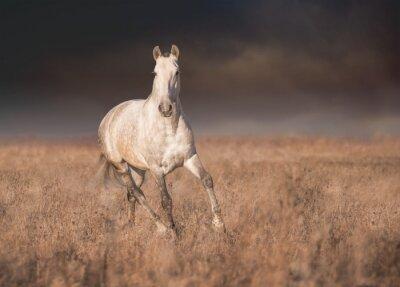 Plakát Gray kůň běh
