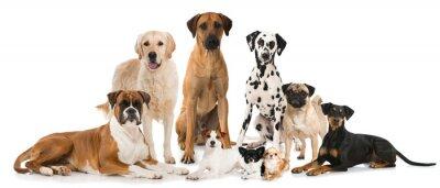 Plakát Gruppe verschiedener Hunde - skupina psů