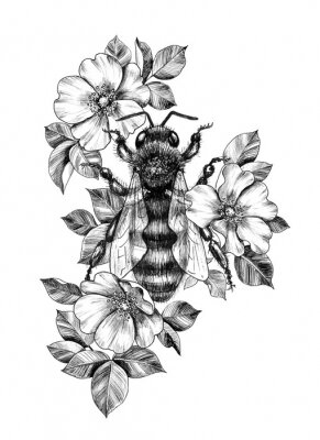 Plakát Hand Drawn Monochrome Bee among  Dog Rose Flowers