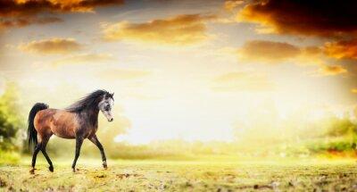 Plakát Hřebec kůň běží klus nad podzimní přírody pozadí, poutač