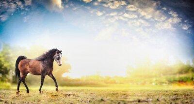 Plakát Hřebec kůň běží klus nad přírodní pozadí s krásnou oblohu, poutač