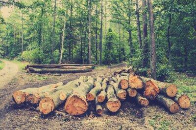 Plakát Hromadu dříví v lese u silnice, vintage foto.