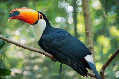 Plakát Iguazu Bird Sanctuary