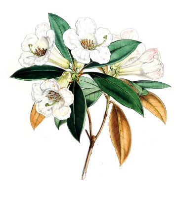 Plakát Ilustrace květiny