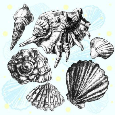 Plakát ilustrace s různými realistickými mušle