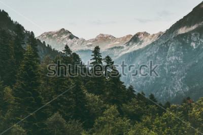 Plakát Jehličnatého lesa a hory Krajina Cestování klidný scenérie letní zelené