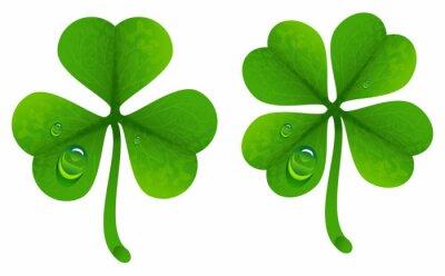Plakát Jetel listy s kapkami rosy. Lucky Clover list. Four-leaf a trojčetné jetel
