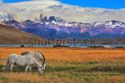 Plakát Jezero Laguna Azul v horách. Na břehu jezera pasoucí se koně. Působivá krajina v národním parku Torres del Paine, Chile