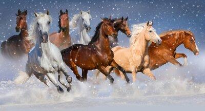 Plakát Jízda na stádo běžet rychle v zimním sněhovém poli