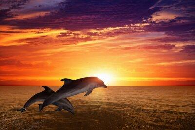 Plakát Jumping dolphins