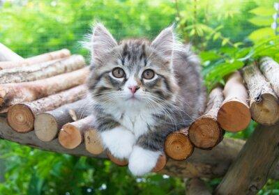 Plakát Katzenbaby ve výběhu