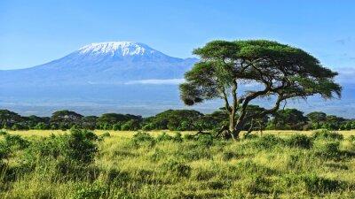Plakát Kilimandžáro