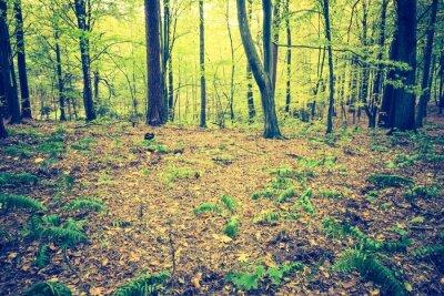 Plakát Klasická fotografie podzimní lesní krajiny
