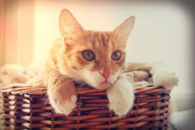 Plakát kočka hledá