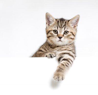 Plakát Kočka nebo kotě izolovaných za bílého vývěsní štít