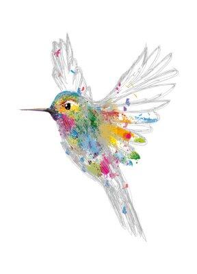 Plakát Kolibri
