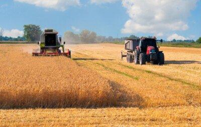 Plakát Kombajn Kombinovat a sklizeň traktor pšenice na slunné letní den