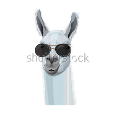 Plakát Komické portrét lamy v černých brýlích. Vektorové ilustrace izolované na bílém pozadí