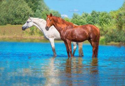 Plakát koně
