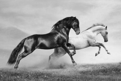 Plakát koně běžet