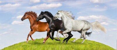 Plakát Koně běžet tryskem na zelené pastviny proti krásné nebe
